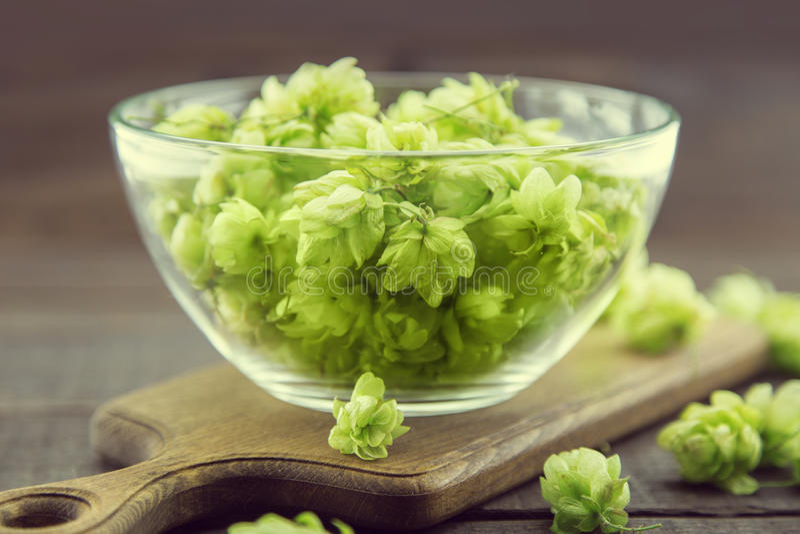 Sluit omhoog van groene rijpe hopkegels in een glaskom over donkere rustieke houten achtergrond Het ingrediënt van de bierproduct royalty-vrije stock foto's