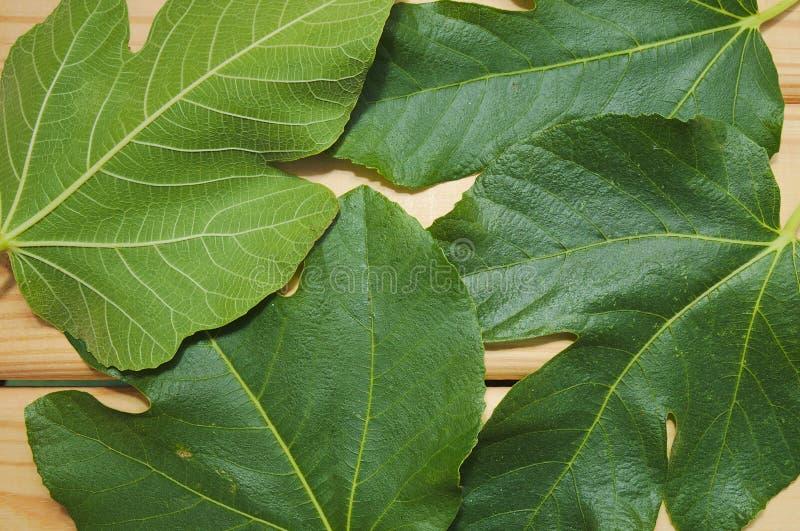 Sluit omhoog van groene vijgebladen op houten lijst stock fotografie