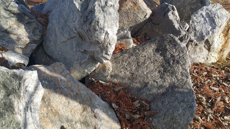 Sluit omhoog van Grote die stenen of rots binnen - tussen groene boom worden geregeld royalty-vrije stock afbeelding