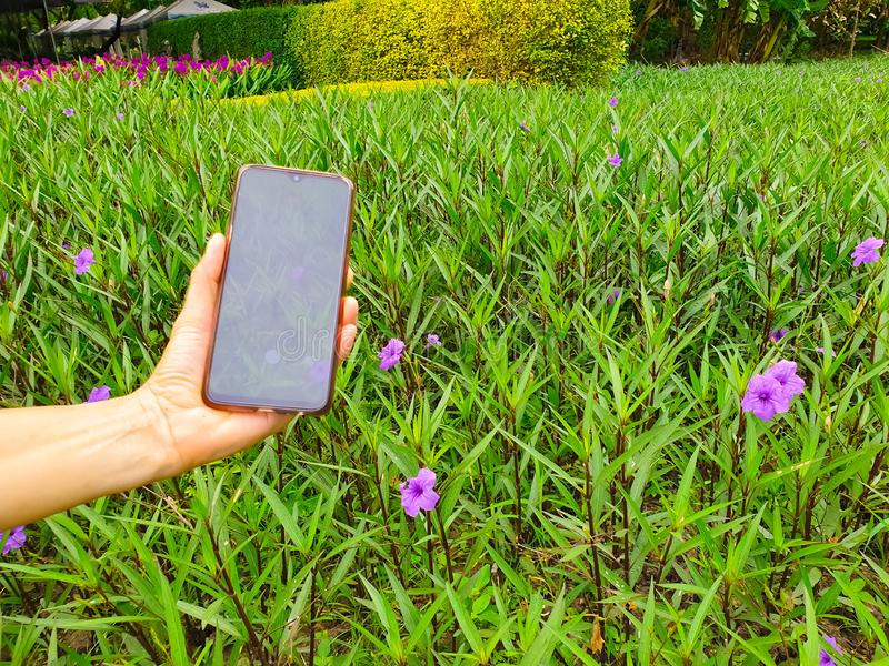 Sluit omhoog van hand jonge vrouw gebruikend smartphone in het park Neem een bloem stock foto's
