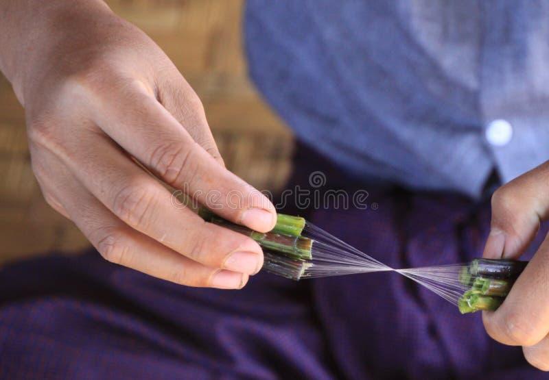 Sluit omhoog van handen van de Birmaanse mens die zijdedraad van lotusbloeminstallatie maken stock fotografie