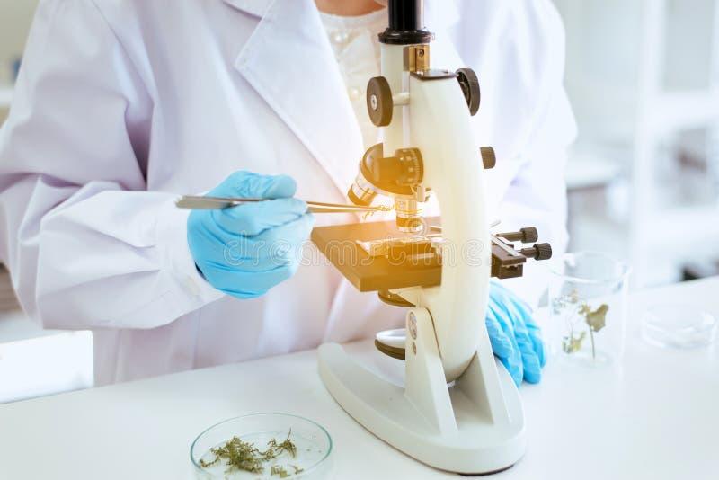 Sluit omhoog van handwetenschapper gebruikend microscoop met metaallens voor onderzoekinstallatie en medische apparatuur in labor royalty-vrije stock foto's