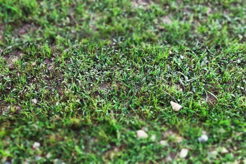 Sluit omhoog van het Groene gazon van de grasyard met Kleine kiezelsteen royalty-vrije stock foto's