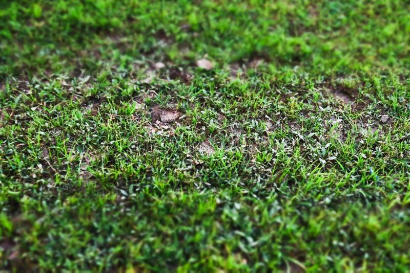 Sluit omhoog van het Groene gazon van de grasyard stock foto