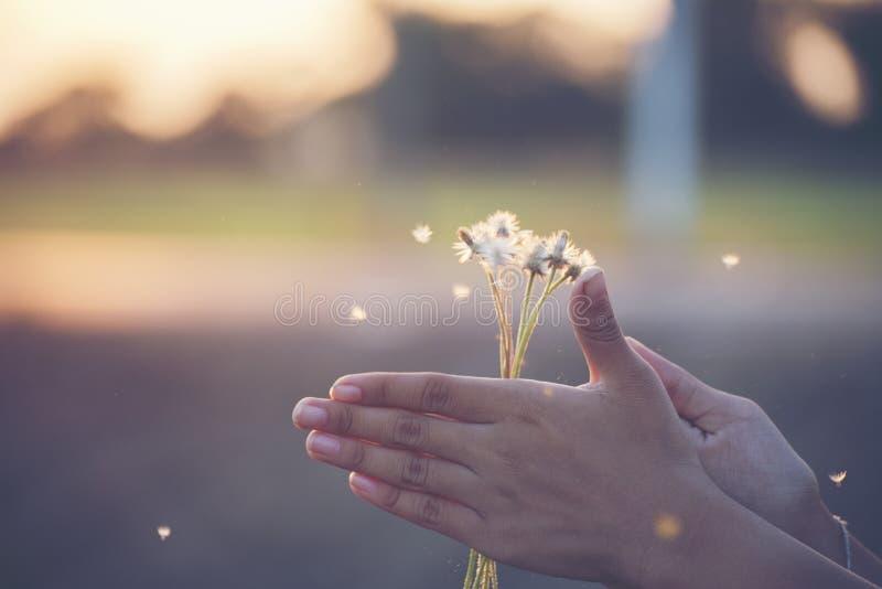 Sluit omhoog van het jonge tiener spelen met grassengebied op de zonsondergang tienersmeisje dat pret heeft royalty-vrije stock afbeelding