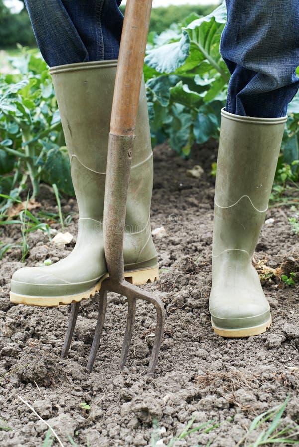 Sluit omhoog van het Landbouwbedrijfgebied van Landbouwersworking in organic stock afbeeldingen