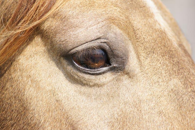 Sluit omhoog van het oog van het paard stock foto