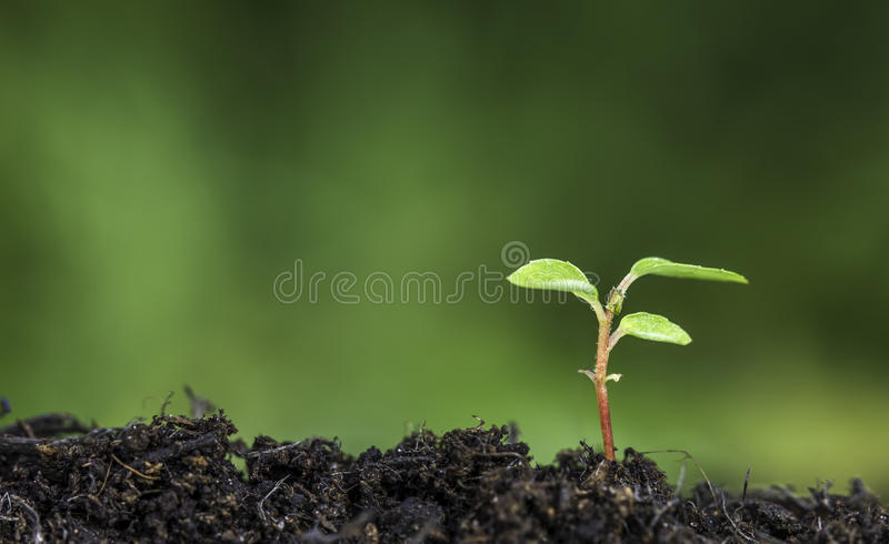 Sluit omhoog van installatie die van de grond met levendige groene bokehachtergrond ontspruiten stock foto
