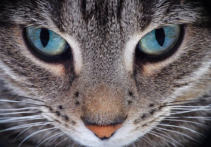 Sluit omhoog van kattensnuit stock afbeeldingen