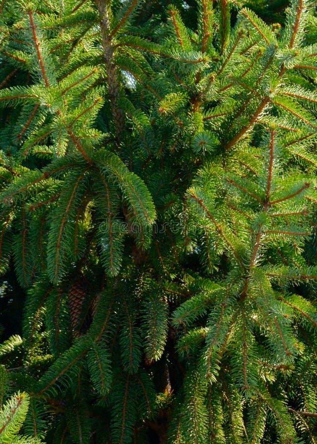 Sluit omhoog van Kerstboom voor Achtergrond royalty-vrije stock afbeeldingen