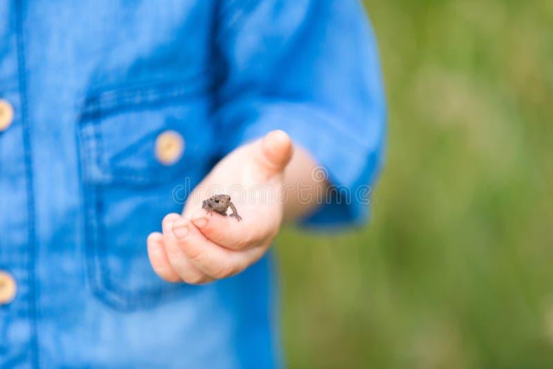 Sluit omhoog van kindhand met kleine kikker royalty-vrije stock afbeelding