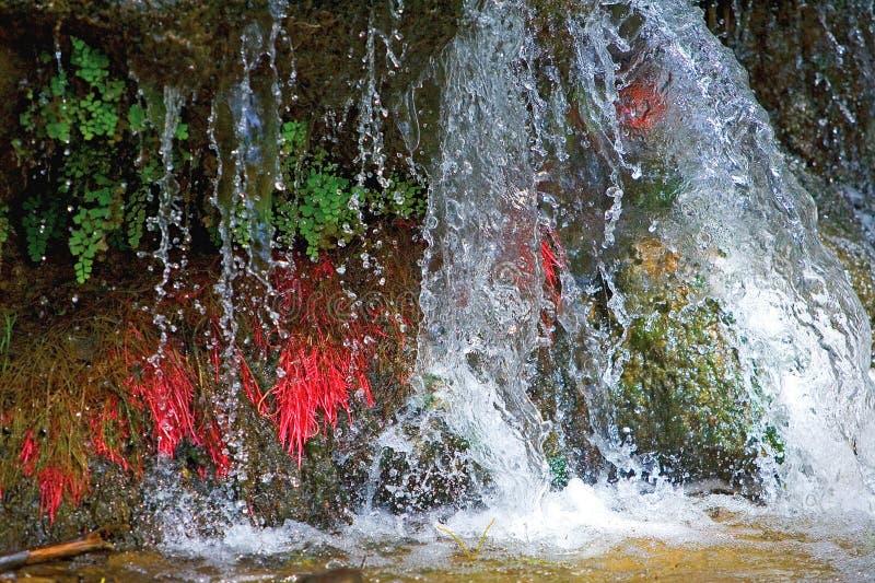 Sluit omhoog van kleine kleurrijke waterval in Spanje stock foto's