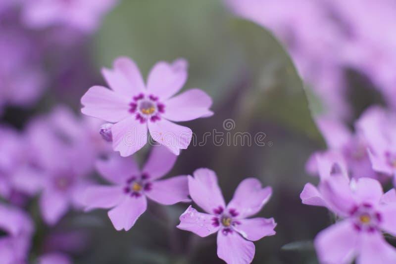 Sluit omhoog van kleine purpere bloem royalty-vrije stock afbeeldingen
