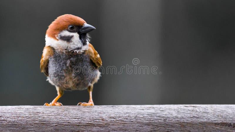 Sluit omhoog van kleine vogel stock foto's