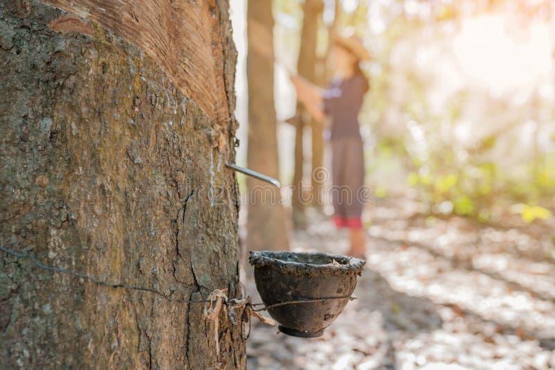 Sluit omhoog van koprubber met Aziatische vrouwen die rubberboom onttrekken royalty-vrije stock fotografie