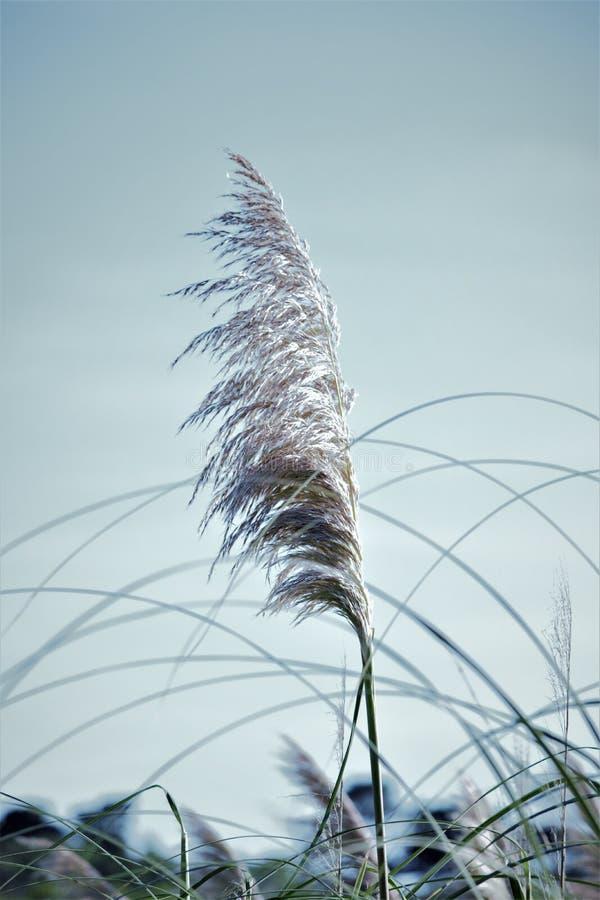 Sluit omhoog van lang gras stock fotografie