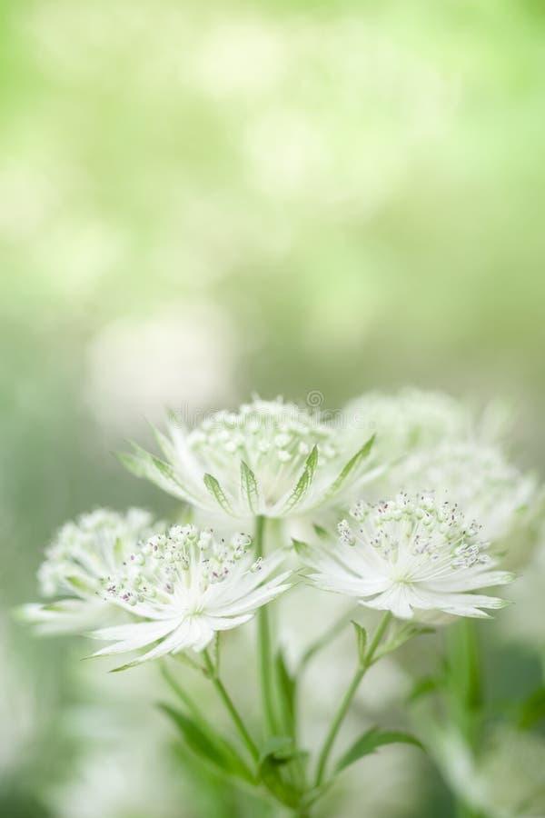 Sluit omhoog van leuke en schoonheids mini witte en groene bloem op vaag groen achtergrond natuurlijk installatieslandschap, ecol royalty-vrije stock afbeelding