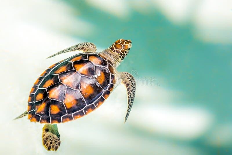 Sluit omhoog van leuke schildpad royalty-vrije stock fotografie