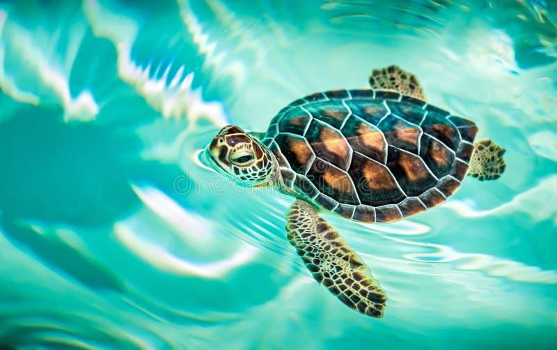 Sluit omhoog van leuke schildpad stock fotografie