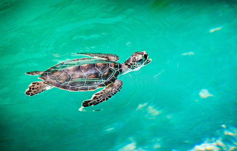 Sluit omhoog van leuke schildpad stock foto
