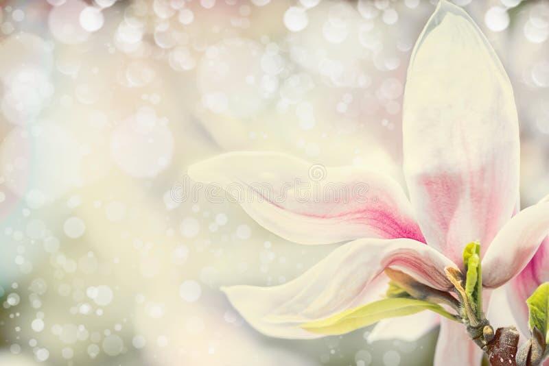Sluit omhoog van magnoliabloem bij pastelkleurachtergrond met bokeh de achtergrond van de de lenteaard royalty-vrije stock foto