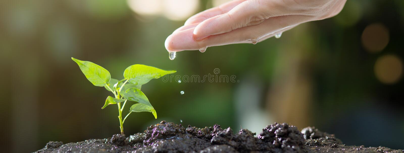 Sluit omhoog van mannelijke handen water gevend jonge boom op grond Groeiend zaad en het planten van concept, Banner met copyspac royalty-vrije stock foto