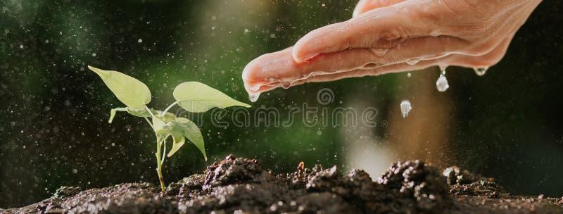 Sluit omhoog van mannelijke handen water gevend jonge boom op grond Groeiend zaad en het planten van concept, Banner met copyspac royalty-vrije stock foto's