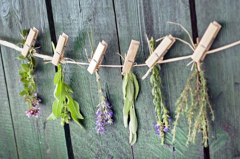Sluit omhoog van Mediterrane kruidenboeketten, salie, basilicum, lavendel, thyme bij het rustieke groene houten lijst hangen als  royalty-vrije stock fotografie