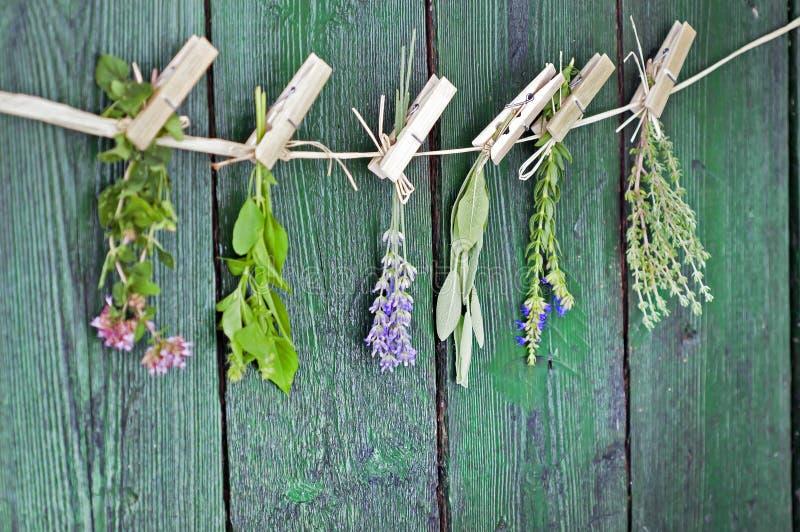 Sluit omhoog van Mediterrane kruidenboeketten, salie, basilicum, lavendel, thyme bij het rustieke groene houten lijst hangen als  royalty-vrije stock afbeelding