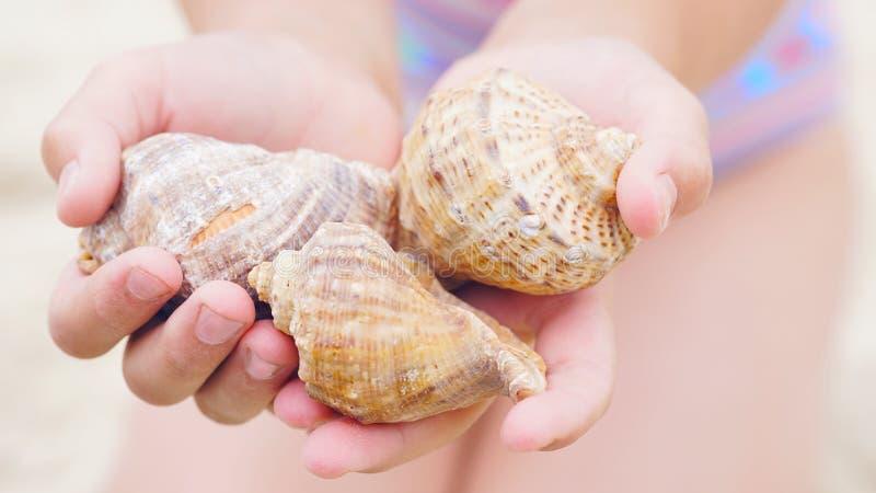 Sluit omhoog van meisje` s handen houdend overzeese shells stock fotografie