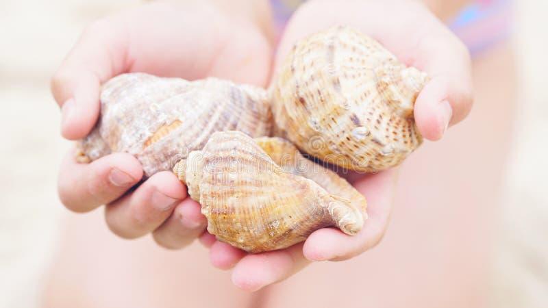 Sluit omhoog van meisje` s handen houdend overzeese shells stock foto's