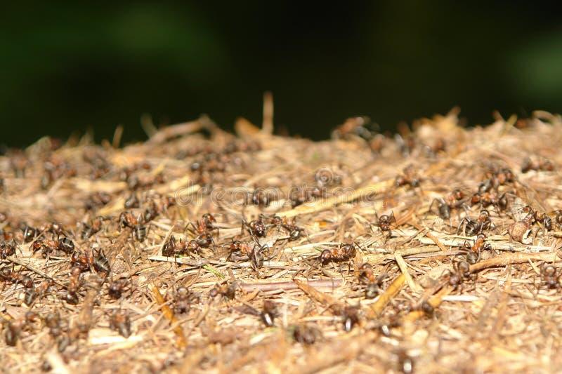 Sluit omhoog van mierennest stock afbeelding