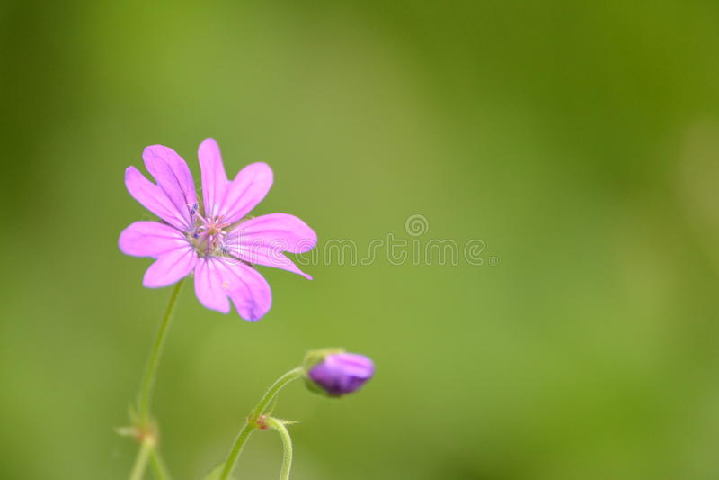 Sluit omhoog van mooie bloem royalty-vrije stock foto's
