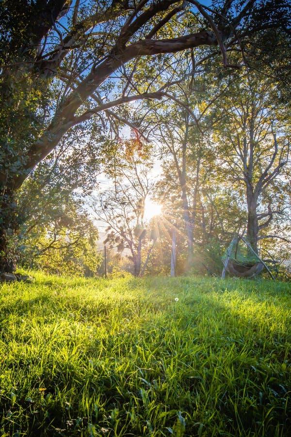 Sluit omhoog van Mooie groene weide en bomen met zon achterverlichting royalty-vrije stock afbeeldingen