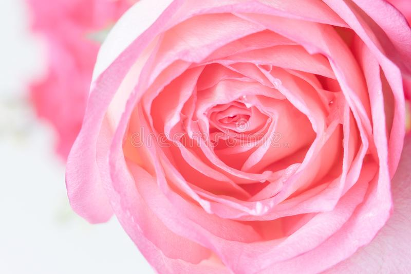 Sluit omhoog van mooie roze bloemachtergrond royalty-vrije stock afbeelding