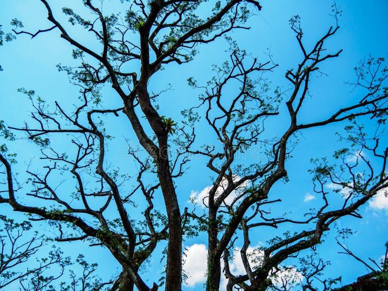 Sluit omhoog van naakte boomtakken tegen een heldere blauwe hemel stock foto