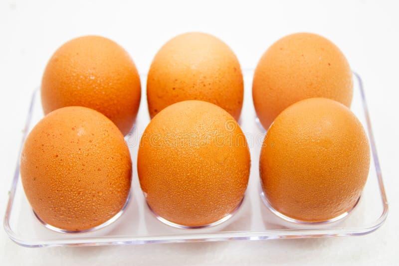Sluit omhoog van natte schone kippeneieren in een plastic doos op witte achtergrond royalty-vrije stock afbeelding