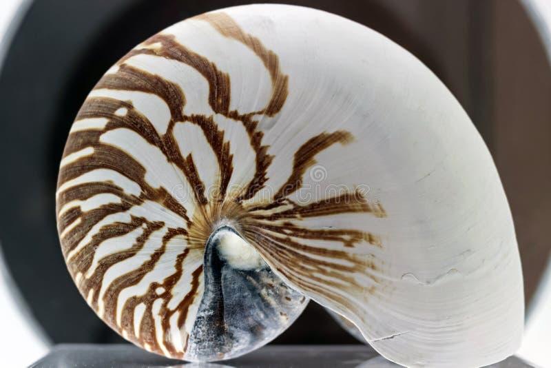 Sluit omhoog van Nautilus-fossiel stock afbeelding