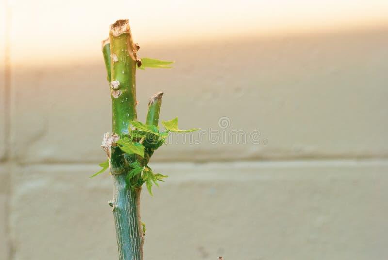 Sluit omhoog van nieuwe spruit in gevoel van het ochtend het lichte, nieuwe leven royalty-vrije stock foto