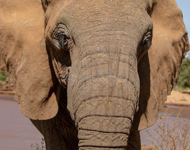 Sluit omhoog van olifant in Kenia op safari royalty-vrije stock afbeelding