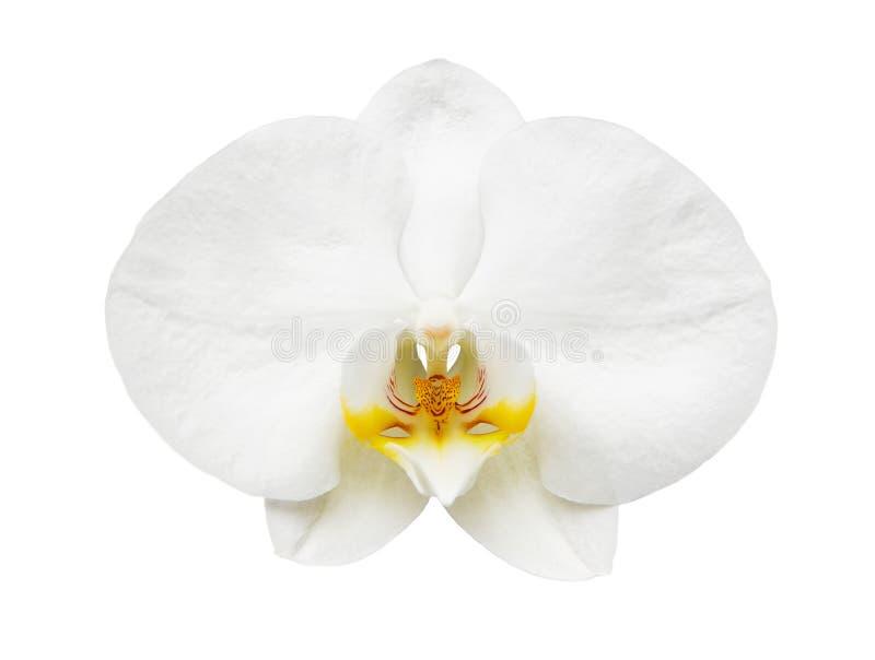 Sluit omhoog van witte orchidee royalty-vrije stock afbeelding