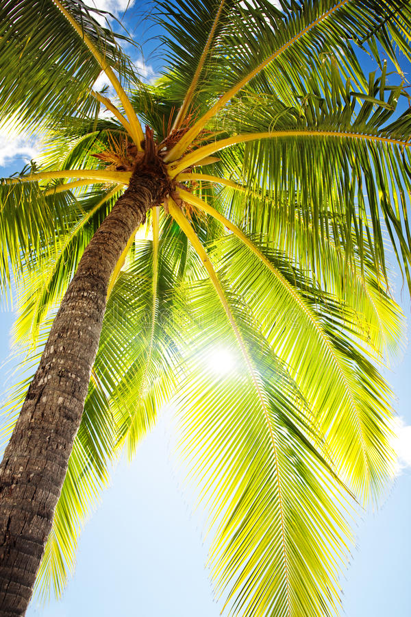 Sluit omhoog van palm agains blauwe hemel stock fotografie