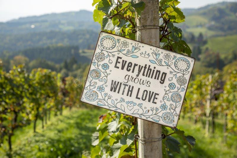 Sluit omhoog van rijpe rode druiven met inschrijving - alles groeit met liefde, klaar voor de herfstoogst in Zuid-Stiermarken royalty-vrije stock afbeelding