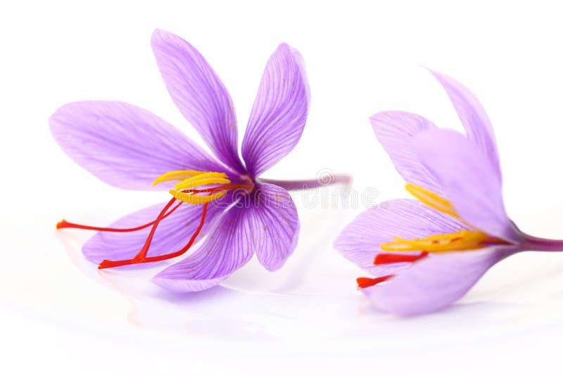 Sluit omhoog van saffraanbloemen stock afbeelding