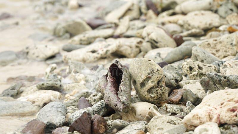 Sluit omhoog van shells op een strand op Unie Eiland in Caraïbisch Cays van Tobago van Heilige Vincent en de Grenadines, royalty-vrije stock foto