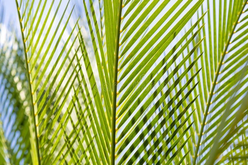 Sluit omhoog van sommige palmbladeren stock afbeelding