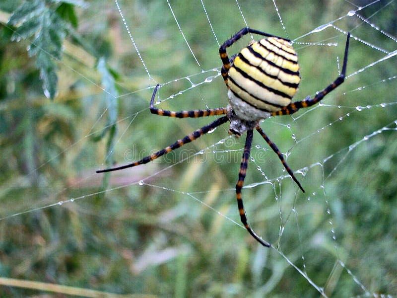 Sluit omhoog van spin stock fotografie