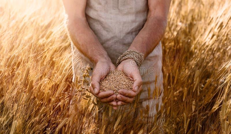 Sluit omhoog van tarwezaden op landbouwershand royalty-vrije stock afbeelding