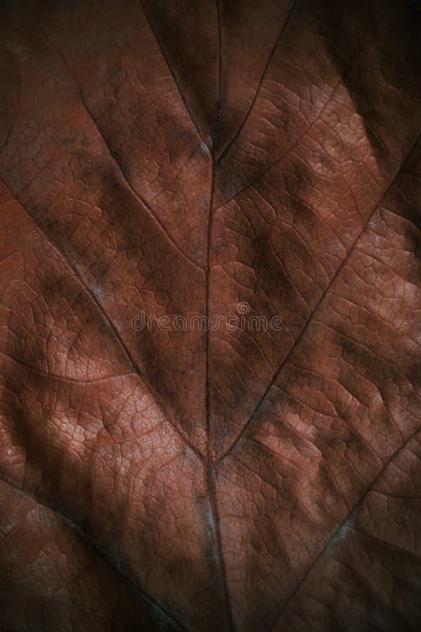 Sluit omhoog van textuur van het de herfst de bruine blad - dalingsachtergrond stock foto's