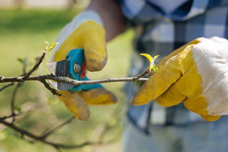 Sluit omhoog van tuinliedenhanden snijdend takken royalty-vrije stock foto